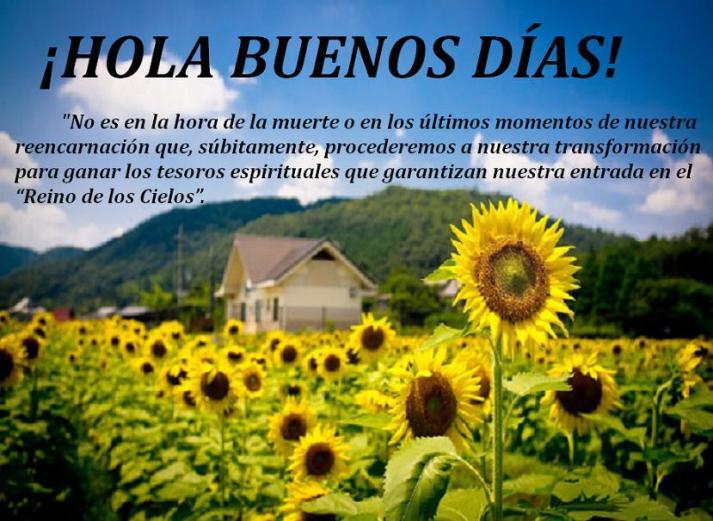Campo-de-Girasoles_Imagenes-de-Flores-de-Girasol