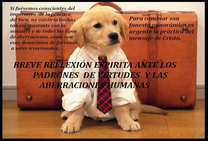 lujo-para-perros1